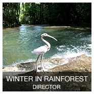WINTER IN RAINFOREST